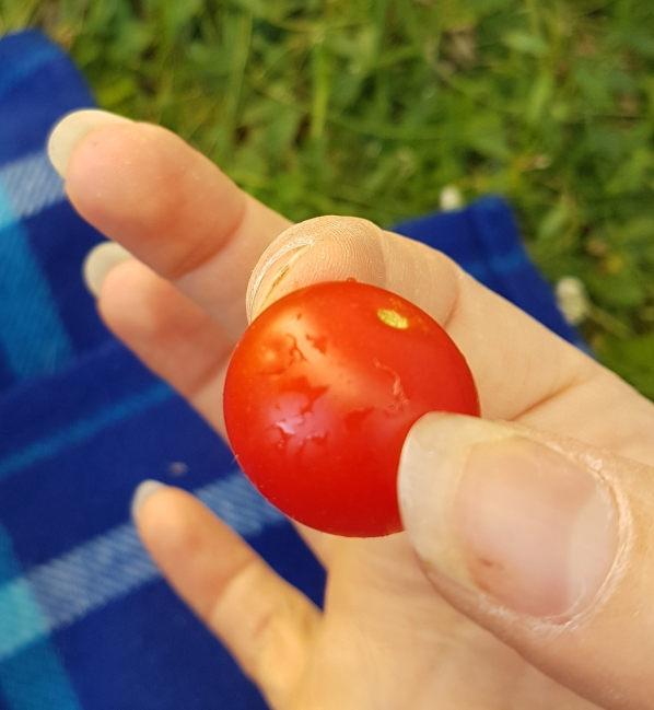 Madame Anne-So_Première tomate